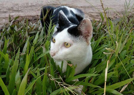 A cat lying on the lawn Stok Fotoğraf - 132363569