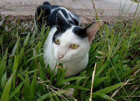 A cat lying on the lawn Stok Fotoğraf - 136971984