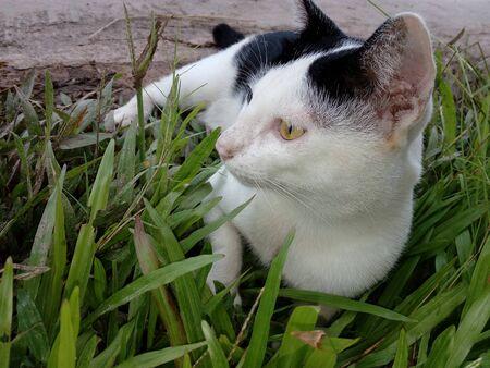 A cat lying on the lawn Stok Fotoğraf - 132363693