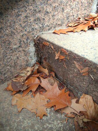 계단에 나뭇잎 스톡 콘텐츠