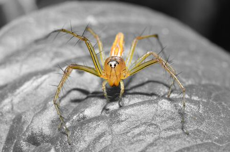 underbrush: spider