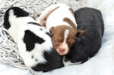 three puppies sleeping photo