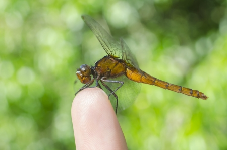 Dragonfly on finger photo