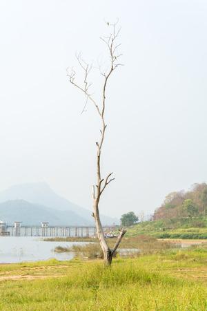 leafless: leafless tree alone in field grass