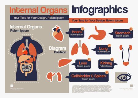organos internos: Vector de diseño plano de los órganos internos Infografía. Vectores