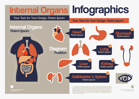 Vector Flat Design over Interne Organen Infographics.