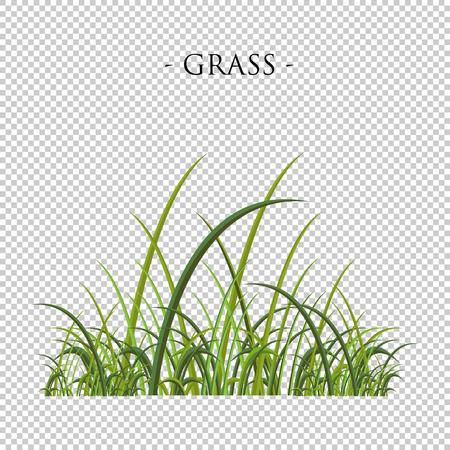 Green grass illustration Illustration
