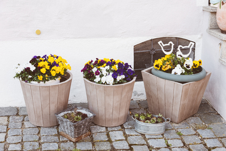 wil: Flowers in decorative pots on wooden ladder, on bricks background.