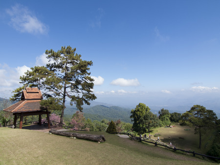 evergreen forest: Evergreen forest on top mountain at Huenamdang