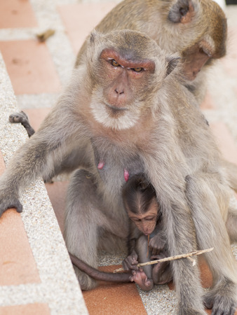 conglomeration: monkey ,Thailand Stock Photo