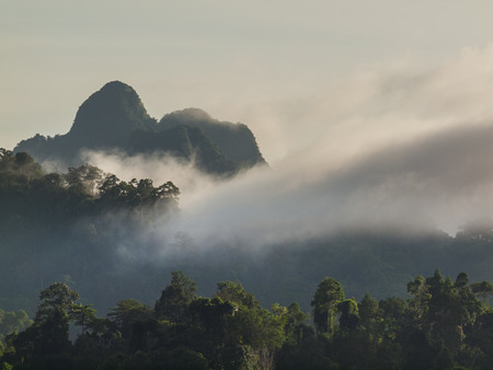 misty forest: misty forest