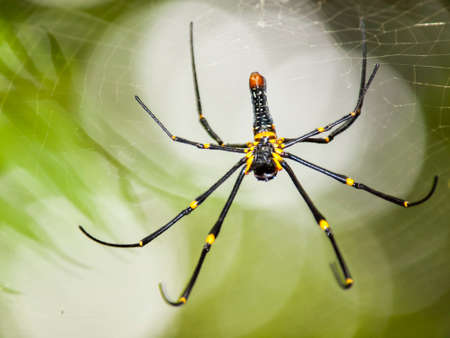 wolf spider: The spider bokeh background Stock Photo