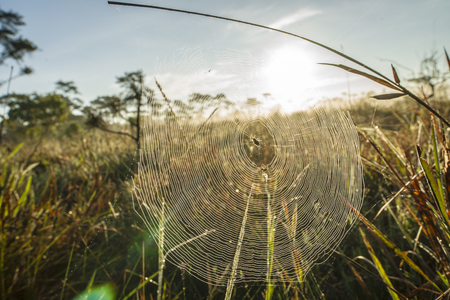 cobwebs: Network cobwebs on the grass Stock Photo