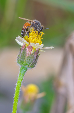 feelers: Bee on flower, and collecting nectar Stock Photo