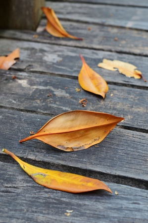 paveway: Close up of dried leaves on wood floor.