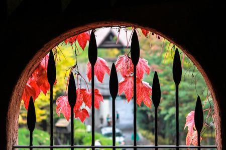 viewfinderchallenge3: window overlooking the autumn season Stock Photo