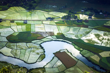 lang: Rice fields in valley in Lang Son, Vietnam