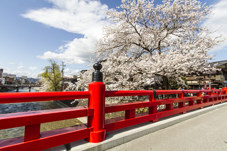 Whhite cherry blossom Katayama Japan