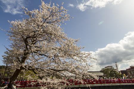 White cherry blossom Katayama Japan Stock Photo