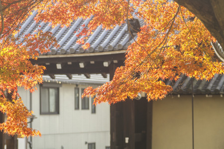 Autumn tints in Japan Stock Photo