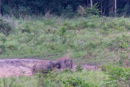 Elephant family in jungle. Cute elephant family view