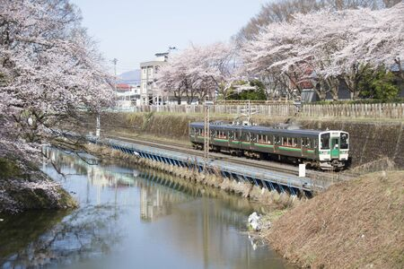 Cherry blossoms or Sakura and local train 版權商用圖片