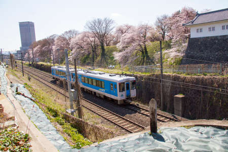 Japan landscape scenic view of JR Tohoku train with full bloom of sakura and cherry blossom, hitome senbonzakura, tohoku, asia with snow mountain in spring season. Beautiful sakura spot view in japan. 新聞圖片