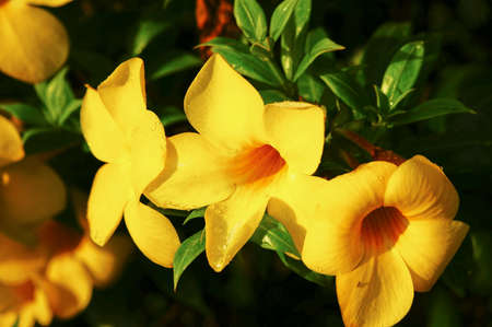 yellow: Yellow flower