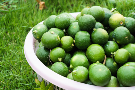fresh lime in basket on the grass