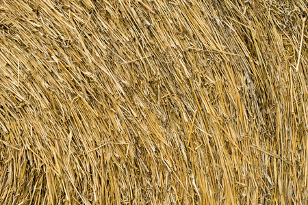 dry grass: Dry grass pattern or dry chaff background