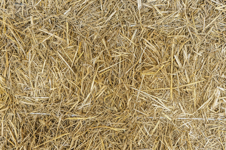 chaff: closeup dry grass, chaff for farmer background