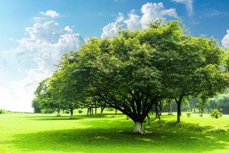 Grüne Bäume im Park, Baum im Sommerpark Standard-Bild - 47544861