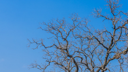 Tree branch without leaves on blue background