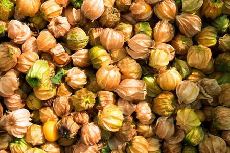 Cape Gooseberry background,Physalis peruviana Stock Photo