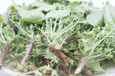 siamensis: Azadirachta indica A. Juss. var. siamensis  Valeton or Siamese neem tree on the plate. Stock Photo
