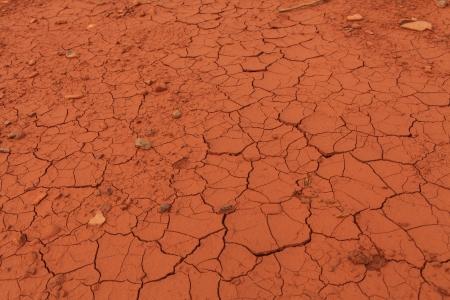 Detail of the cracked soil