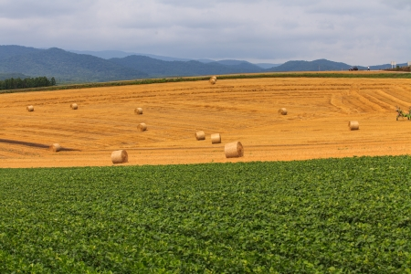 haystack and Wheat field photo