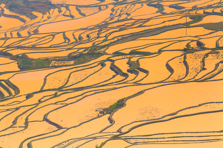 golden sunrise in Long Ji terraced rice fields, China photo