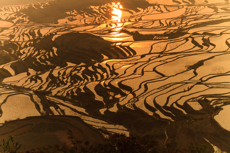golden sunrise in Long Ji terraced rice fields, China