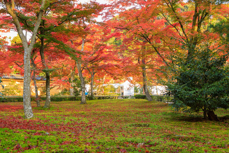 Garden in Autumn Season front of kinkaku-ji Temple Japan