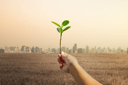 Raise hands with trees, with the background of many large building. Global warming and pollution theme .Conceptual image symbolizing  global warming leading to destroying the natural ecosystems of our planet. Stock Photo