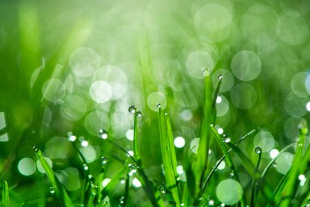 Fresh green grass with dew drops in sunshine and bokeh. Abstract blurry background. Nature background. copy space.