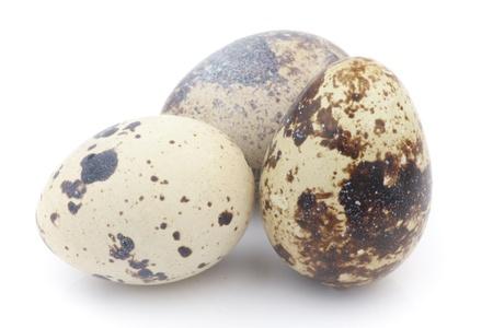 kuropatwa: Isolated partridge eggs