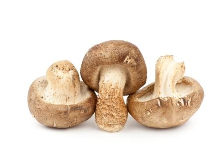 Fresh Shiitake Mushroom Stock Photo - 10227812