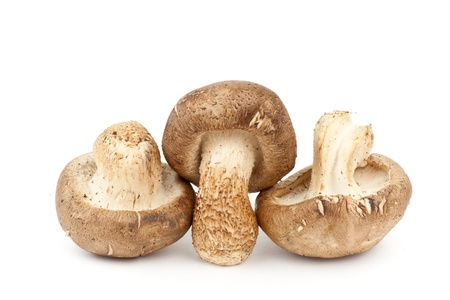 Fresh Shiitake Mushroom Stock Photo - 10227812