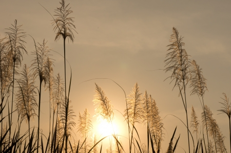 Grasses and sun photo