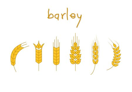 Set of barley vector, Symbol of barley illustration.