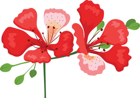 flamboyant flower hand drawing vector