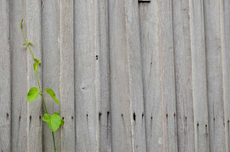 climber on old wood wall  photo