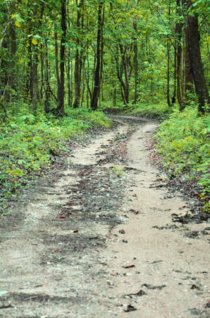 non-asphalt road in forest photo